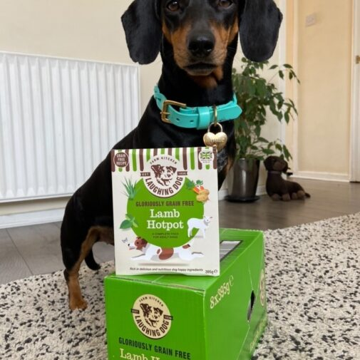 Sausage dog standing next to laughing dog products