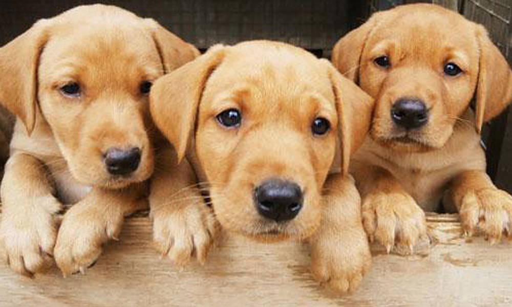 When to stop soaking dry food for puppies | Laughing Dog Food
