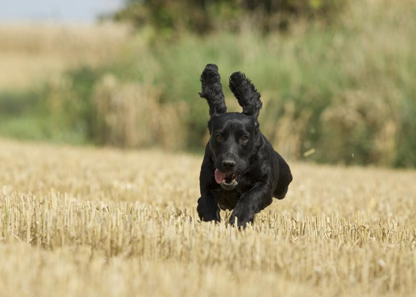 Keeping your dog cool in summer Image | Laughing Dog Food