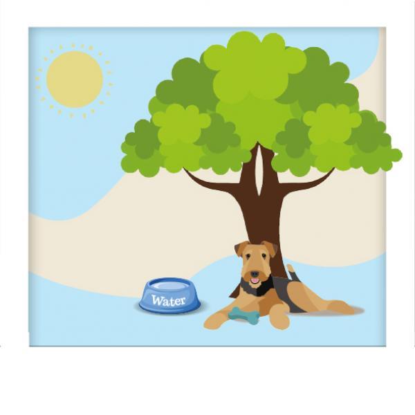 Managing the Heatwave Image   Laughing Dog Food