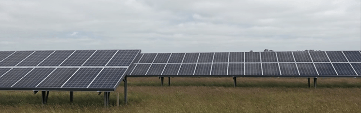 Did you know that we have a solar panel farm? Image | Laughing Dog Food