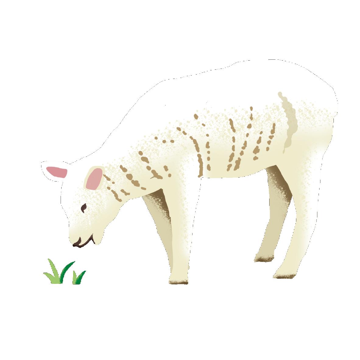 Grass fed lamb Image   Laughing Dog Food