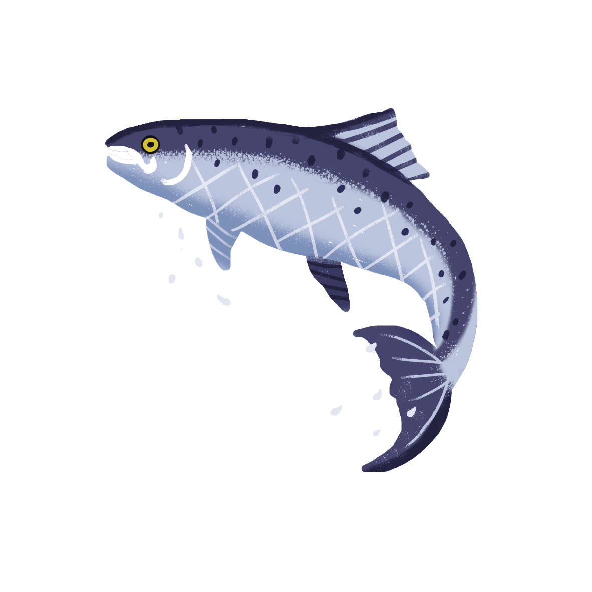 Atlantic salmon Image   Laughing Dog Food