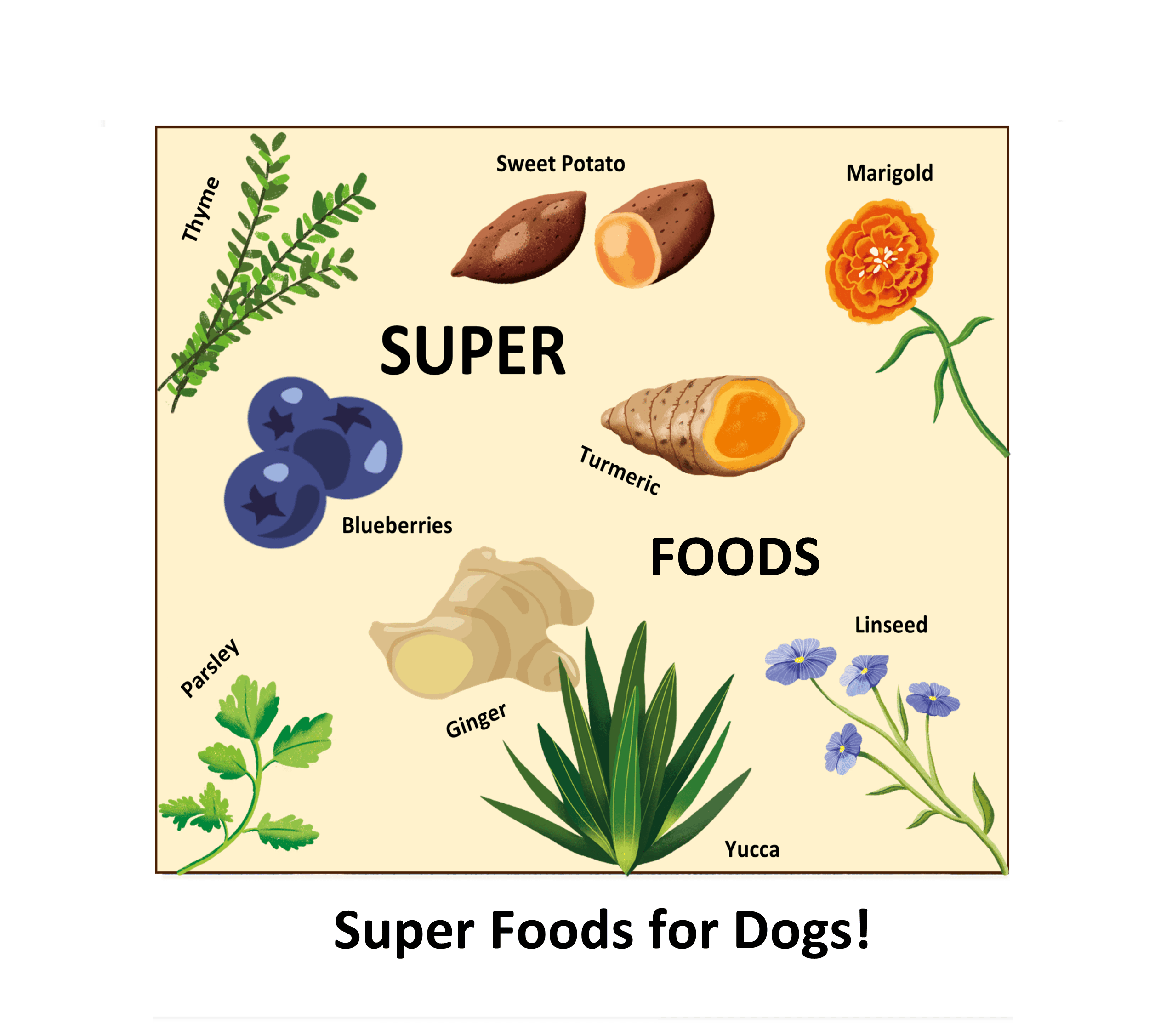 What Ingredients Should You Feed Your Dog? Image | Laughing Dog Food