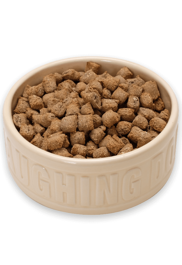 Why has my dog stopped eating his food? Image | Laughing Dog Food