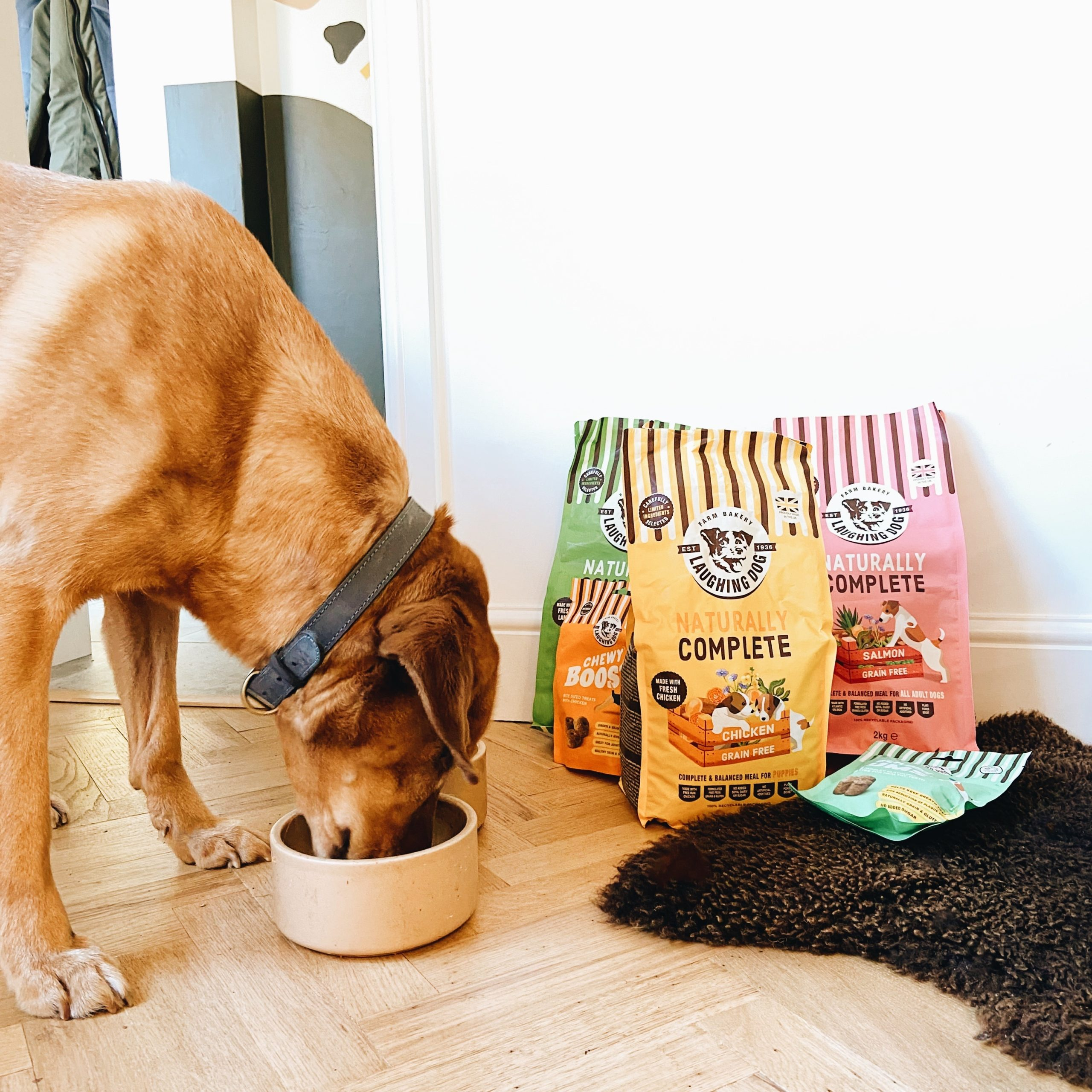 How to help my obese dog lose weight Image | Laughing Dog Food