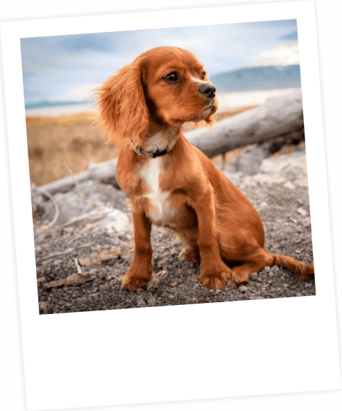 Home Image | Laughing Dog Food