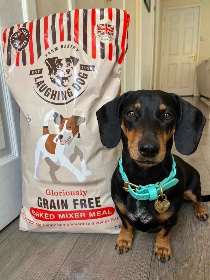 RAWgust! Image | Laughing Dog Food