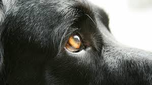 What colours can dogs see? Image | Laughing Dog Food