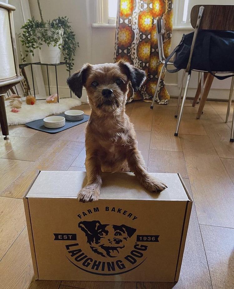 Personalised Dog Treat Hamper Image   Laughing Dog Food