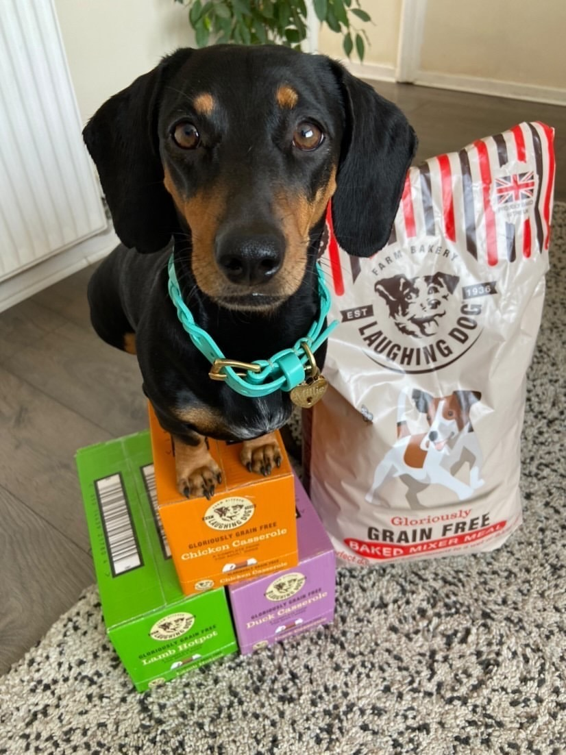 Sausage dog sitting on Laughing Dog products next to Grain Free baked mixer meal packet