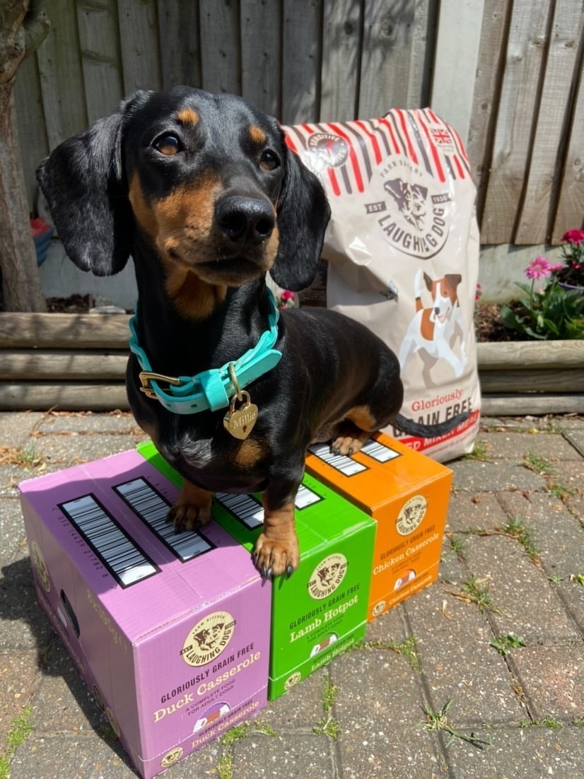 Sausage dog standing next to Grain Free baked mixer meal packet
